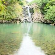 Maui Hiking Safaris logo