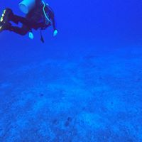 Lahaina Divers logo