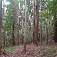 Makawao Forest Reserve logo