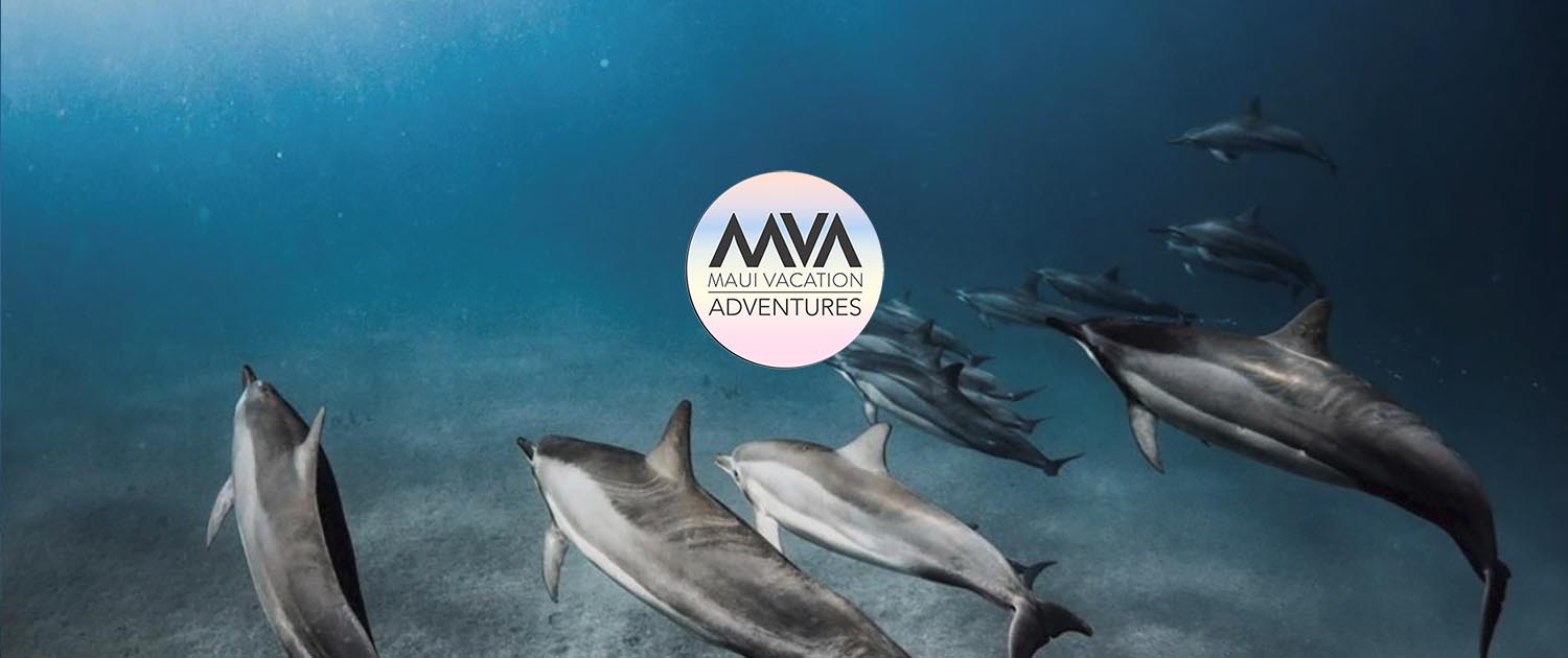 Maui Vacation Adventures logo
