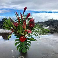 Hana Tropicals logo