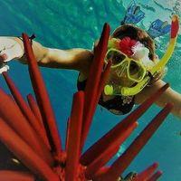 Maui reef adventures logo