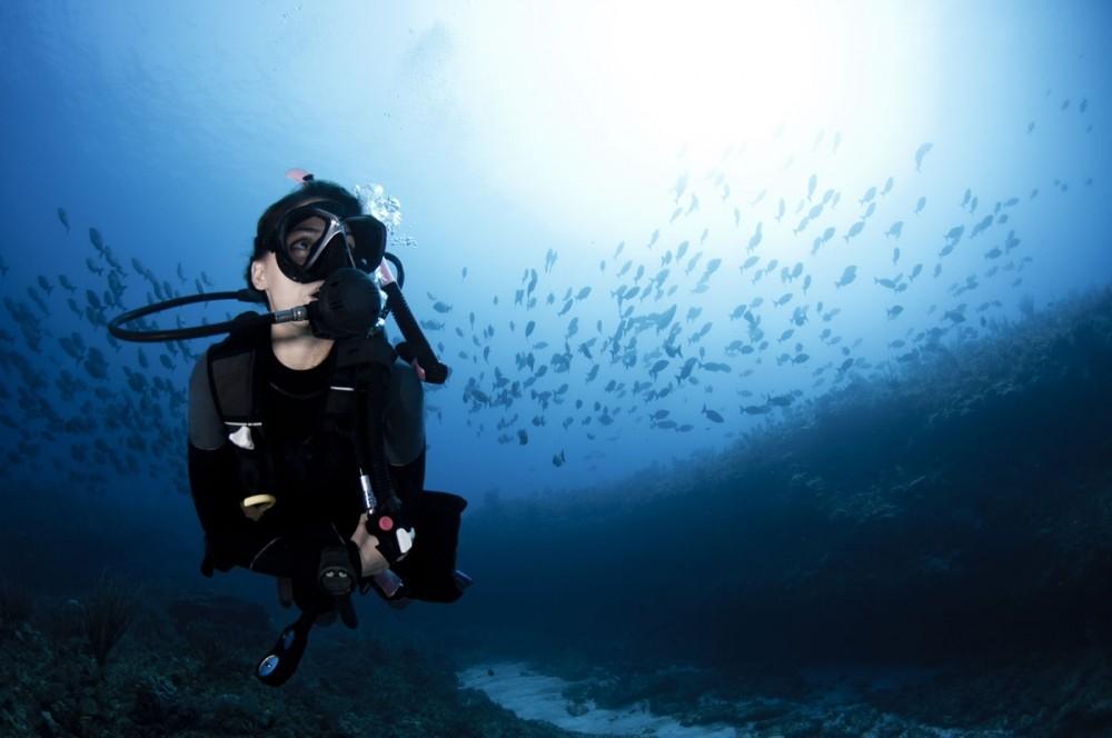Sammy Scuba Diving logo