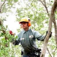 Hawaii Tree Service logo