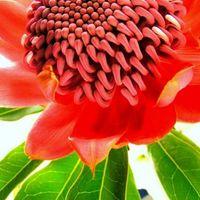 Sweet Blossoms Hawaii logo
