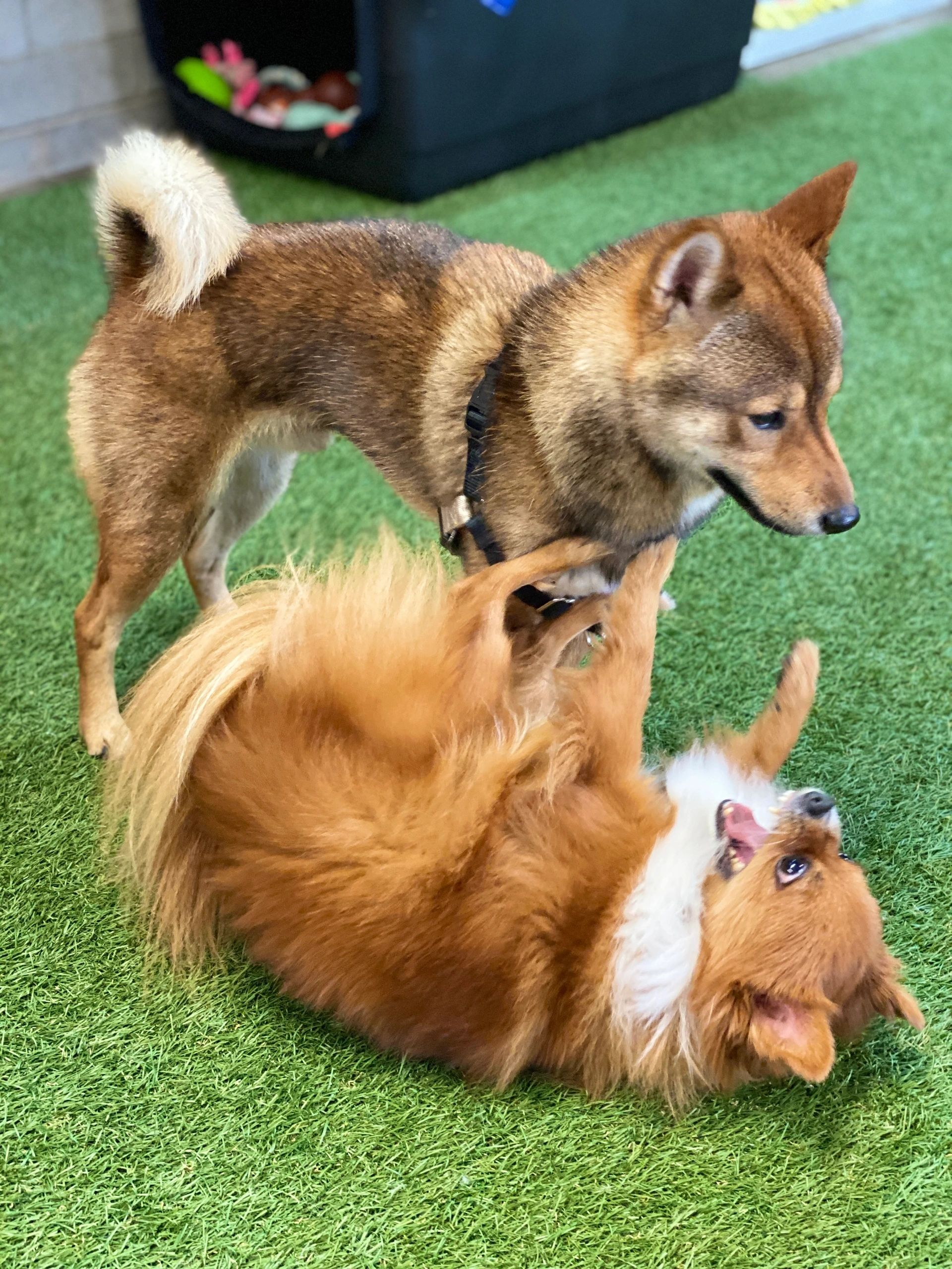 Barks & Purrs Pet Daycare & more logo