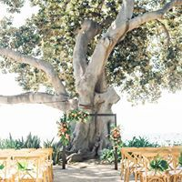 A White Orchid Wedding Inc logo